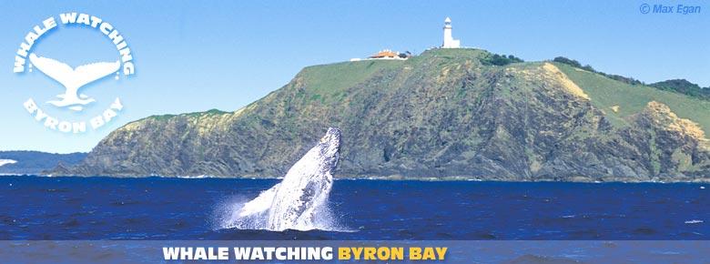 Byron bay album - Dive byron bay ...