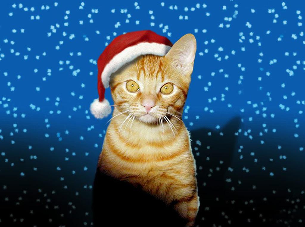 Le web du gars buzzhaut chat de no l - Image de chat de noel ...