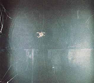 la toile d araign 233 e